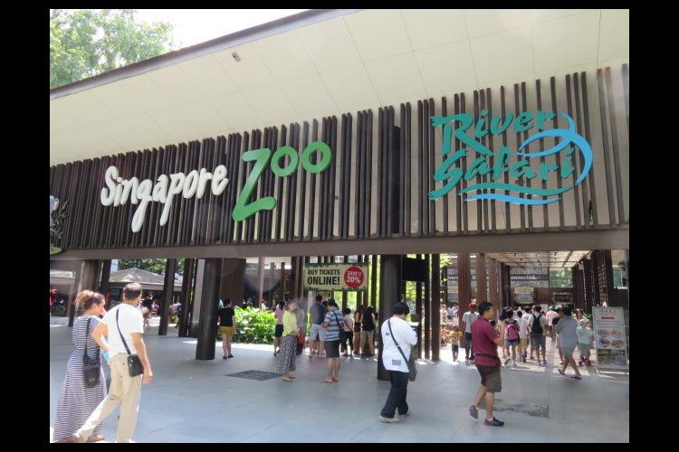 1日満喫 充実のシンガポール観光 + 人...の写真