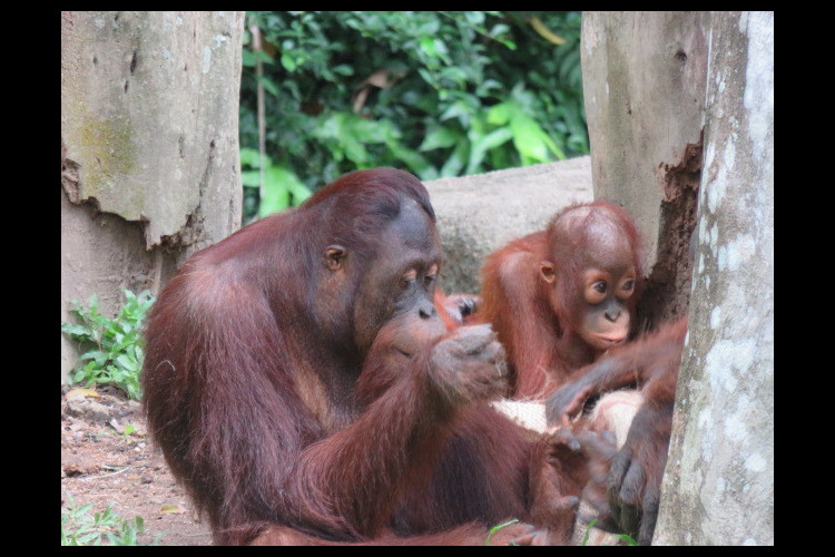 午後発! よくばり動物園とナイトサファリ...の写真