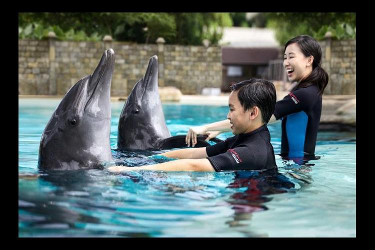 イルカと遊ぼう! ドルフィン・ディスカバ...の写真