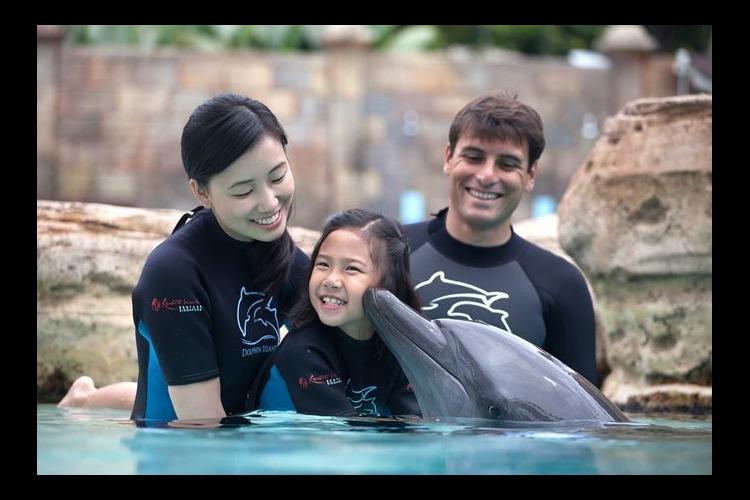 イルカと遊ぼう! ドルフィン・アドベンチ...の写真