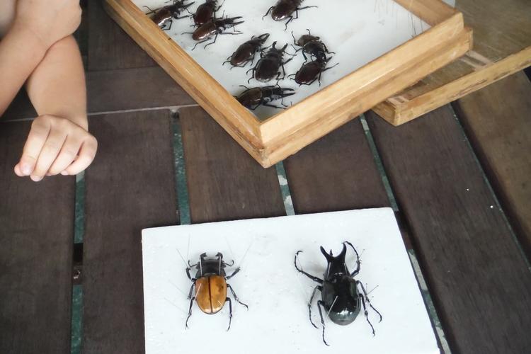 オリジナル標本造りと昆虫採集の写真
