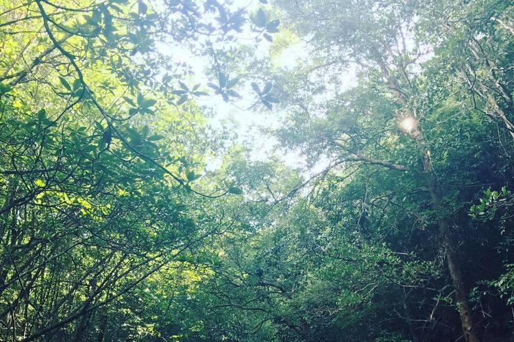 ジャングルカヤックツアーの写真