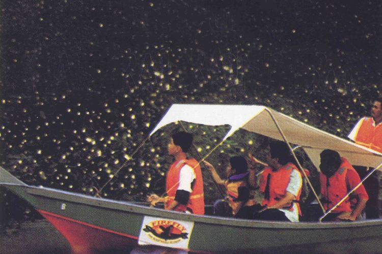 夕方発 ! クアラセランゴール川 ホタル...の写真
