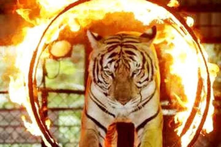 シラチャー・タイガーズー (バンコク発)の写真