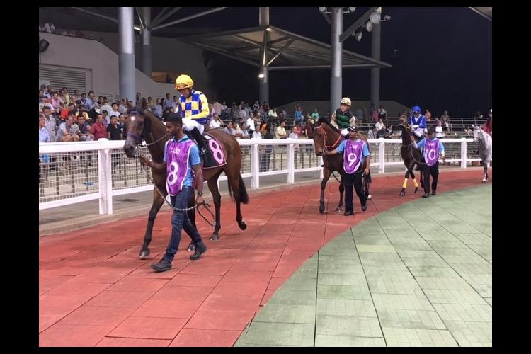 シンガポール競馬観戦ツアーの写真