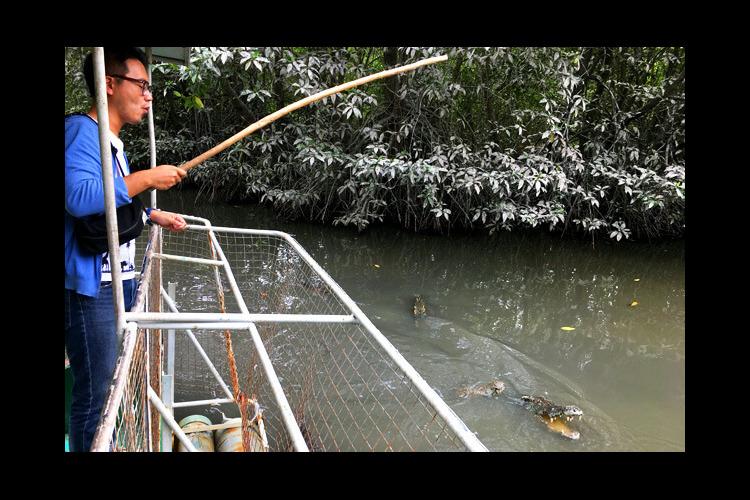 大自然 + ワニ釣りを楽しめる神秘のマン...の写真