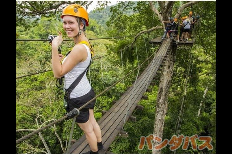 大自然を味合う ジャングルでジップライン...の写真