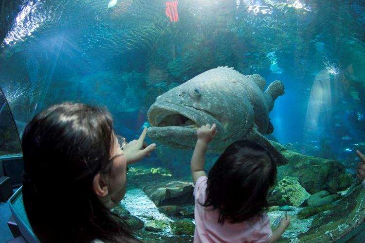 水族館アンダーウォーターワールド見学ツア...の写真