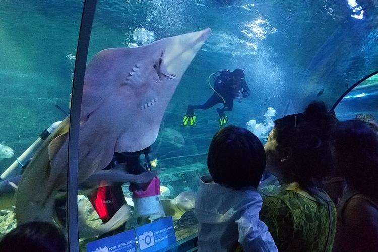 サメと一緒に泳げちゃう ダイブ with...の写真