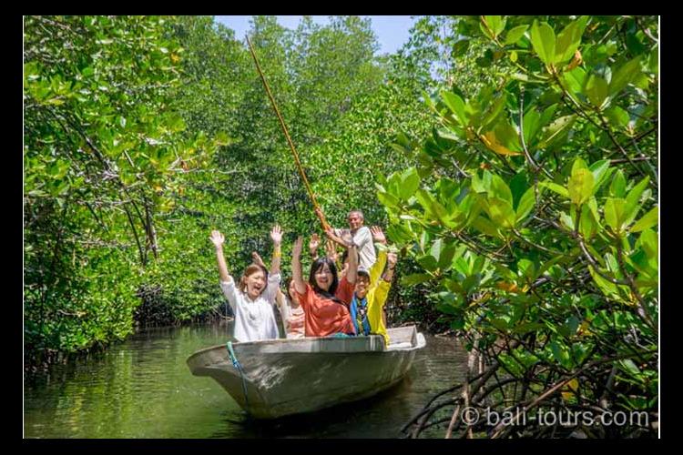 レンボンガン島マングローブ + シュノー...の写真