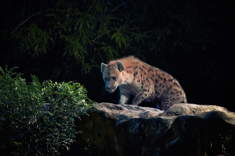 動物達がすぐそばに! 夜の動物園の写真