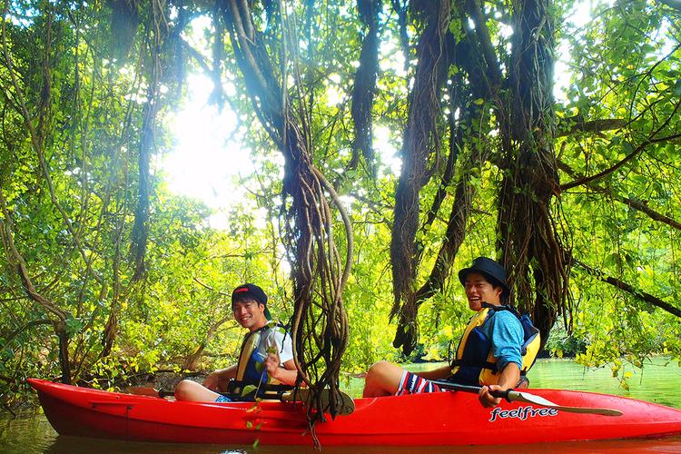 マングローブリバーカヤックツアーの写真