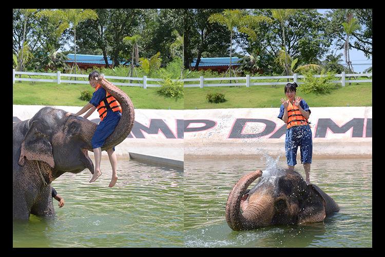 象と水浴び + ダムヌンサドゥアック水上...の写真