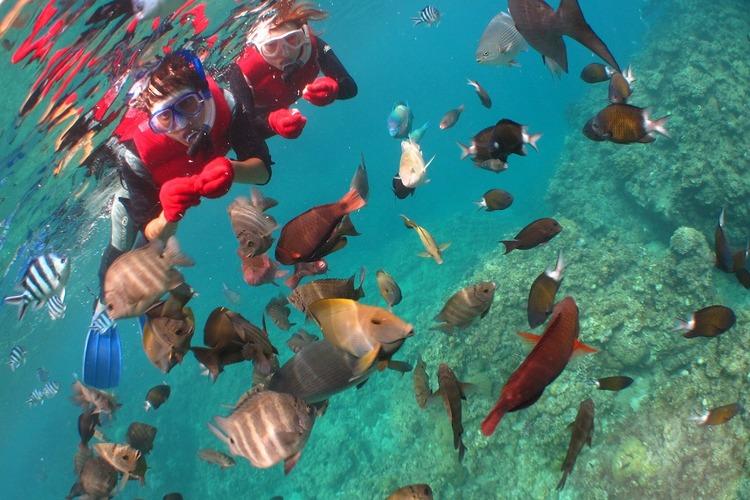 カラフルなお魚と触れあえる可愛いお魚と青...の写真