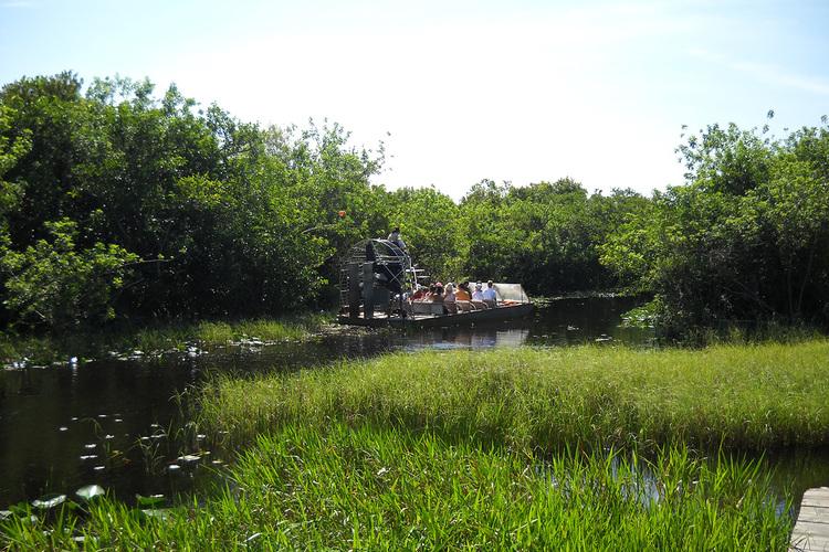 世界遺産エバーグレイズ大湿原を快走 エア...の写真