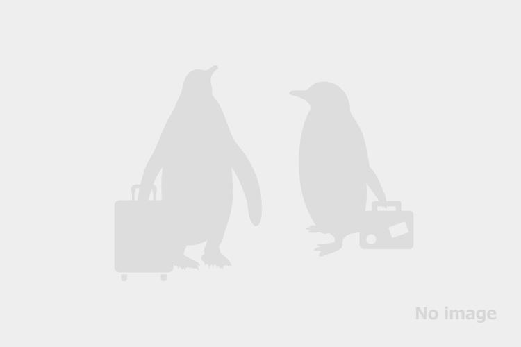 ワシントン ナショナル空港 混乗トランス...の写真