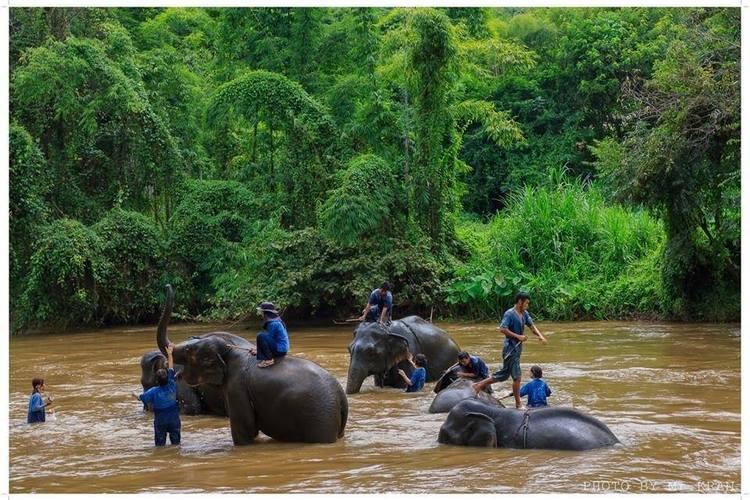 象使い体験1日ツアー (日本語ガイド付き...の写真