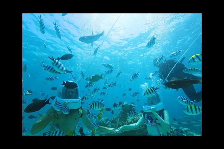 [レンボンガン島]海中散歩♪マリンウォー...の写真