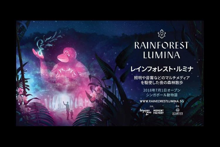 レインフォレスト・ルミナの写真