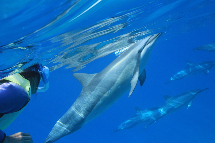 野生のイルカと泳ぐツアー 愉快なクルーと...の写真