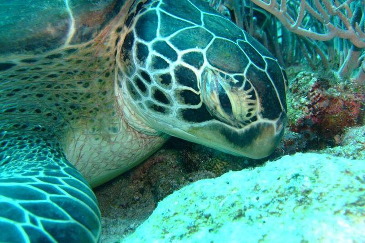 シュノーケリングツアー イパオビーチでお...の写真