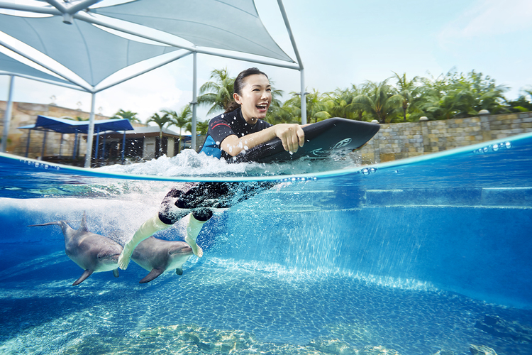 イルカと遊ぼう ドルフィン・アドベンチャ...の写真