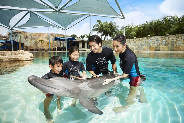 イルカと遊ぼう ドルフィン・ディスカバリ...の写真