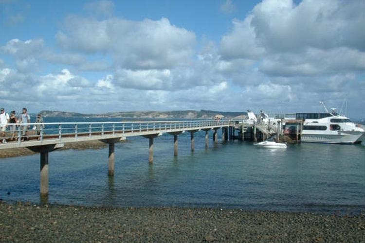 ティリティリマタンギ島 バードウォッチン...の写真