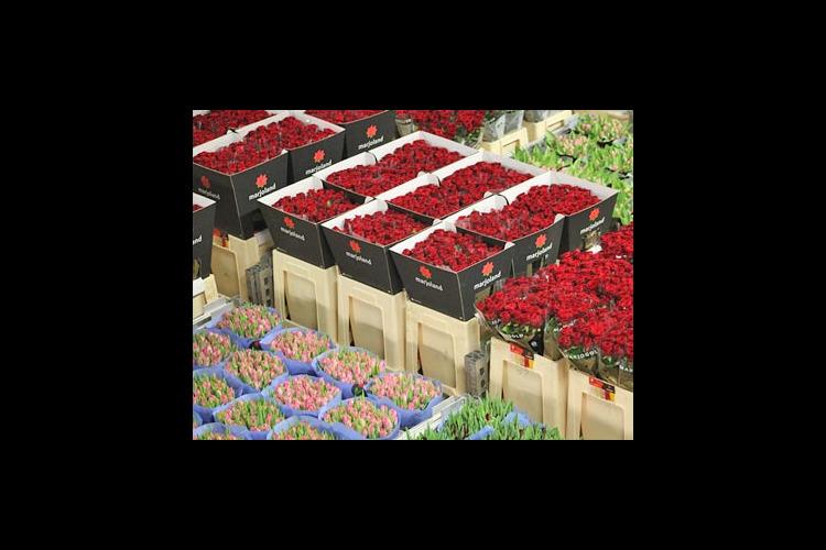 【月・火曜日限定】アールスメール花市場 ...の写真