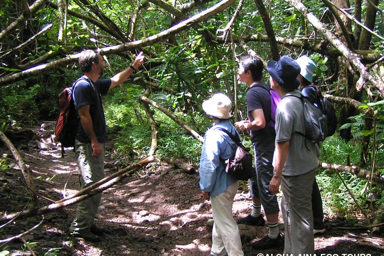 ガイドと楽しむマノア滝ハイキングツアー ...の写真