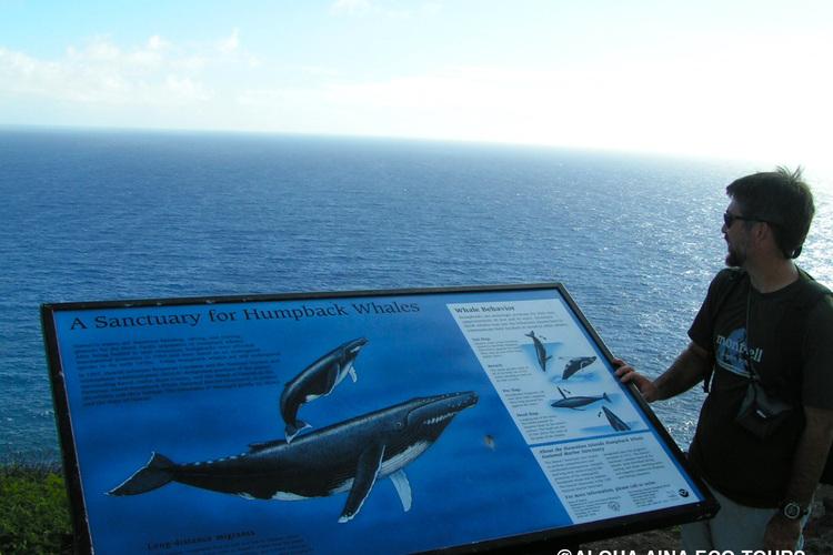 絶景 マカプウ岬 熟練ガイドがご案内 ネ...の写真