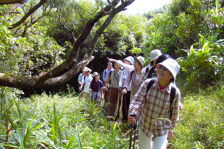 ジャングルハイキングツアー ハワイ固有種...の写真