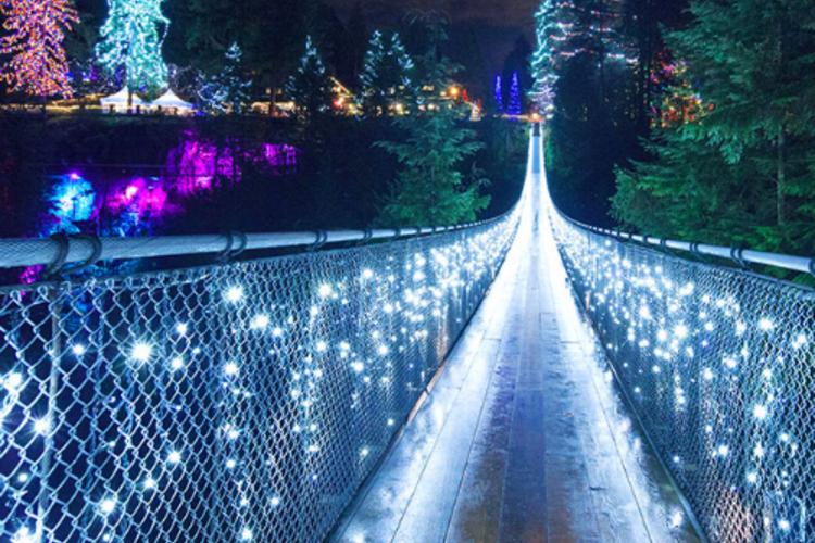 クリスマスの超定番! キャピラノ吊り橋ラ...の写真