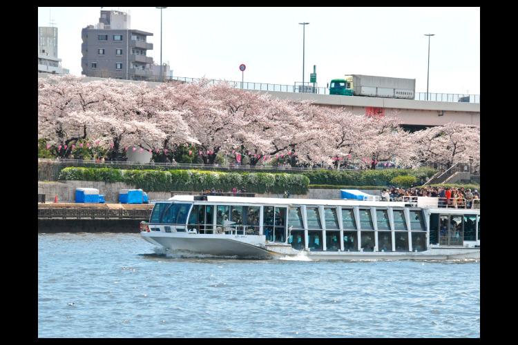 隅田川お花見クルーズ&浜離宮恩賜庭園桜散...の写真