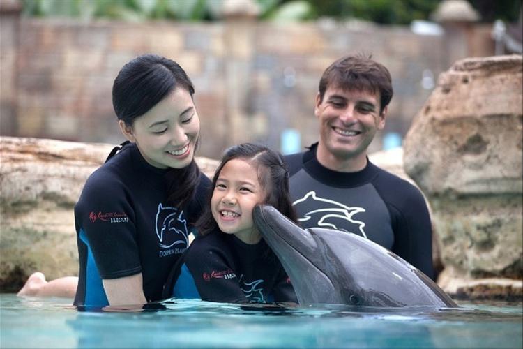[最安値]イルカと遊ぼう! ドルフィンA...の写真