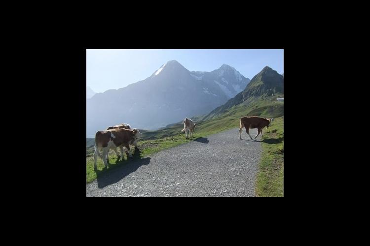 絶景ハイキング メンリッヘン~クライネシ...の写真