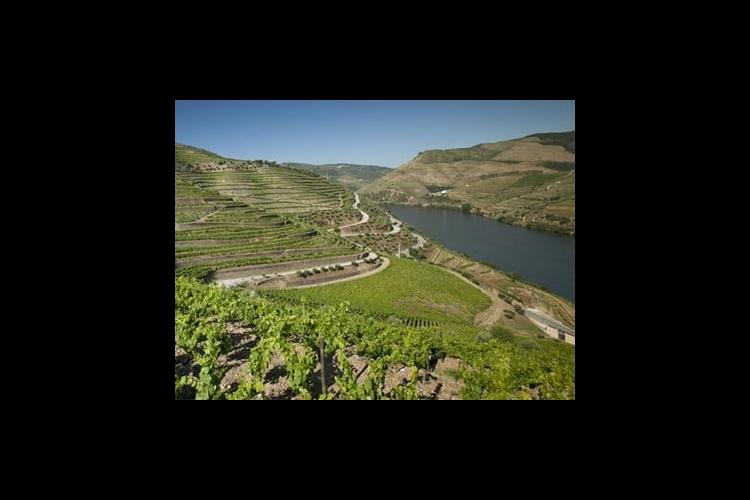 ポートワインの故郷 世界遺産ドウロ渓谷1...の写真