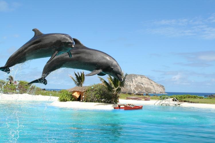 ハワイ最大級の海のテーマパーク!!『シー...の写真