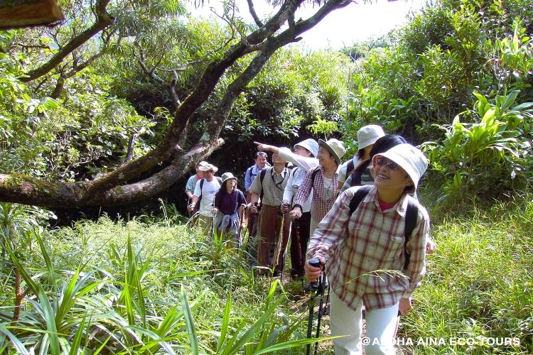 ジャングル・ハイキング・ツアーの写真