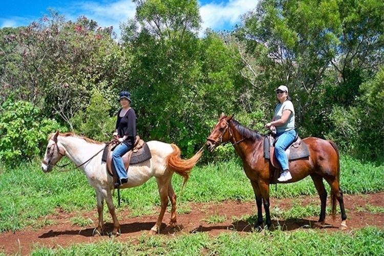 渓谷乗馬90分とノースショア観光の写真