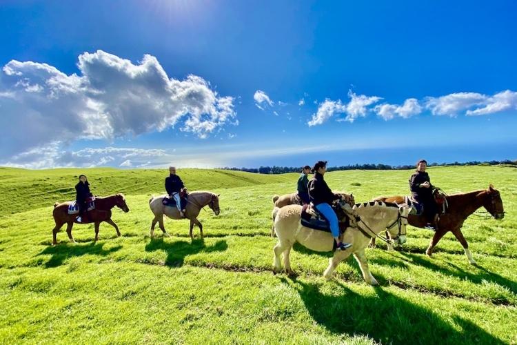 コハラ山の大草原で乗馬体験! ハワイ島の...の写真