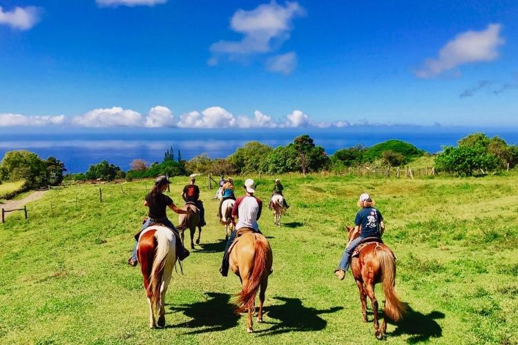 コナエリアで乗馬を楽しもう! カイルアコ...の写真