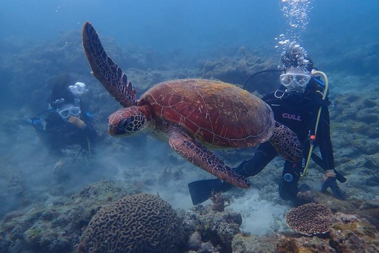 [ウミガメを探す ! 体験ダイビング] ...の写真