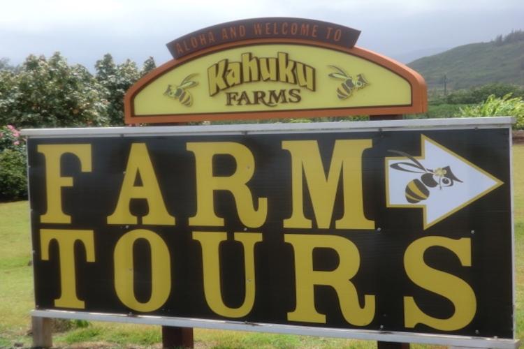 オーガニック農場などのノースショア名所巡...の写真
