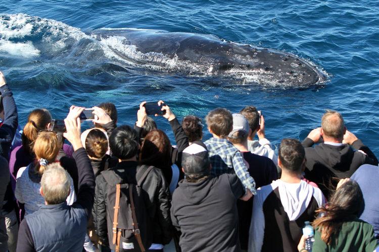 クジラウォッチングツアーの写真