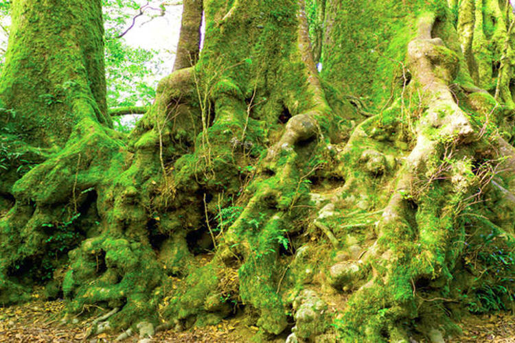 オライリーズ・ラミントン国立公園ツアー(...の写真