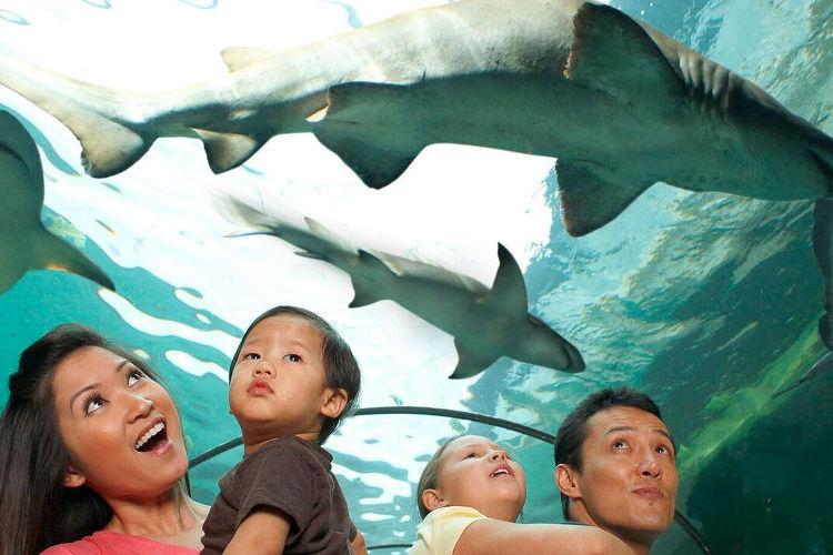 [特価] シーライフ・シドニー水族館の写真