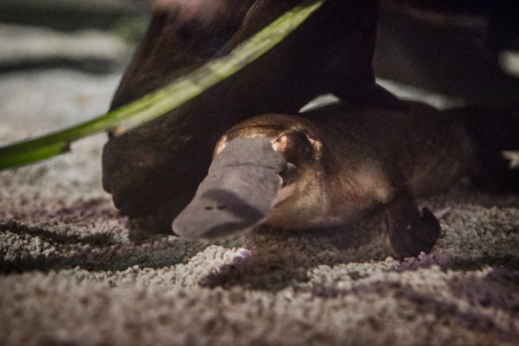 ワイルドライフ・シドニー動物園の写真