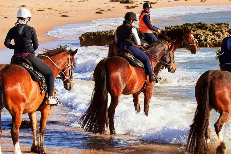 メルボルン モーニントン半島乗馬体験(6...の写真
