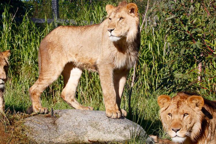 メルボルン動物園の写真